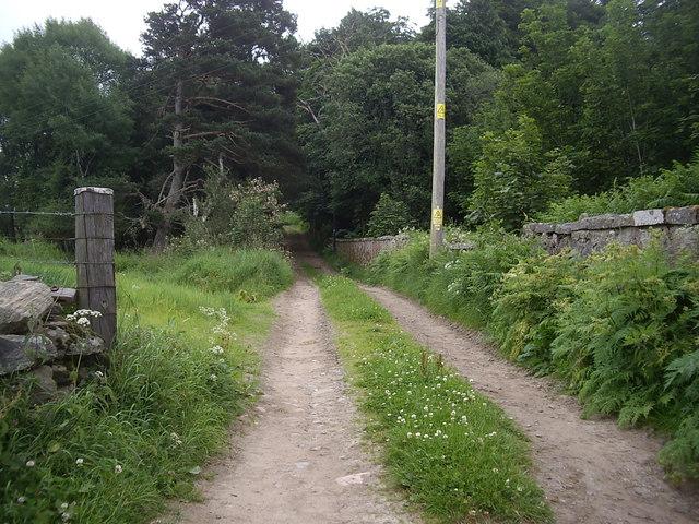 Track to Upper Tillydrine
