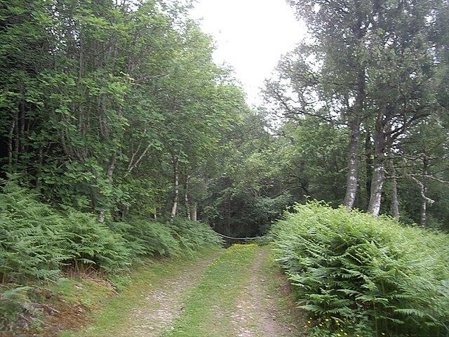 Track into Sluie Woods