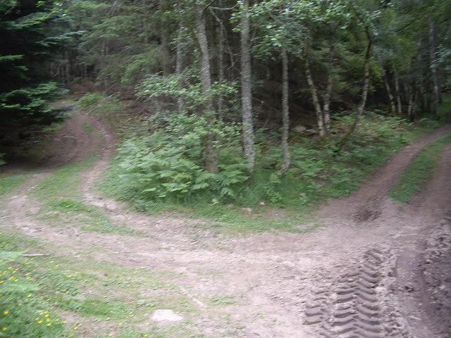Track junction in Sluie Woods near Tillydrine
