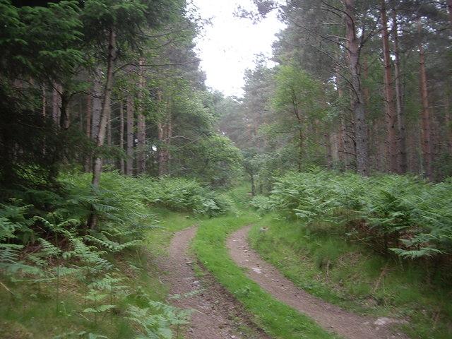 Track through Sluie Woods