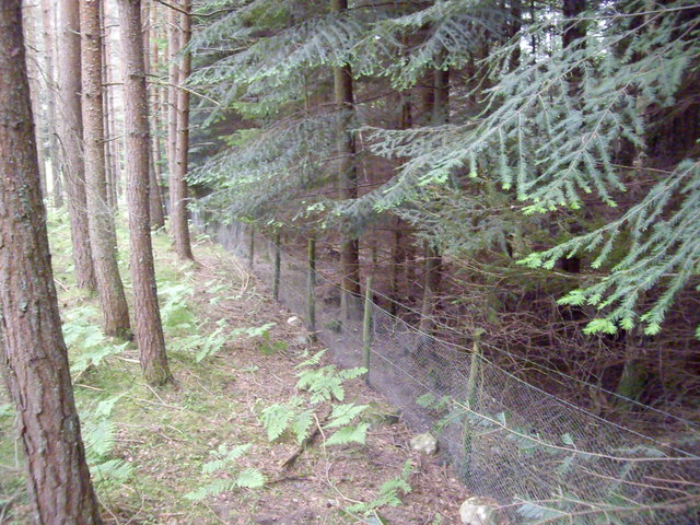 A boundary fence between two conifer plantations