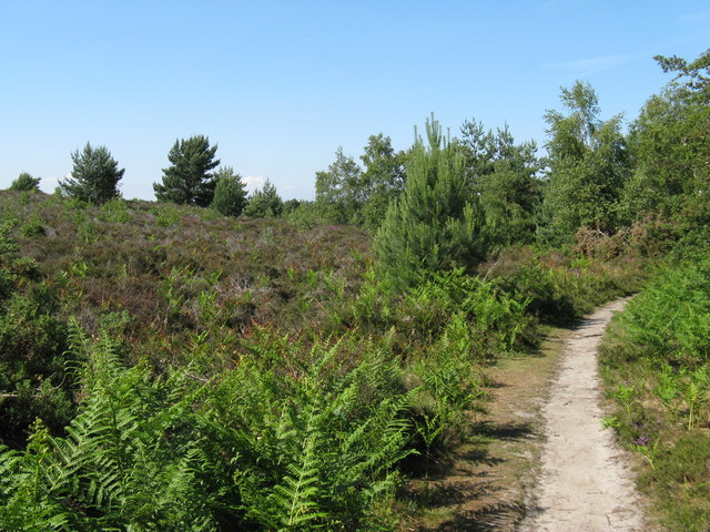 Footpath on Heyshott Common