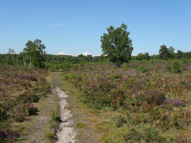 Track through Heyshott Common