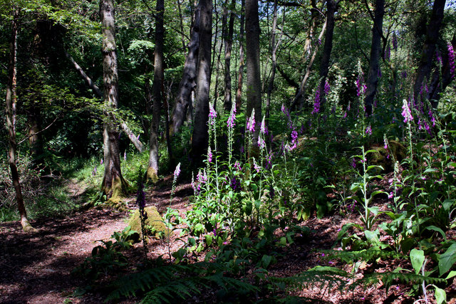 Foxgloves on the Fort