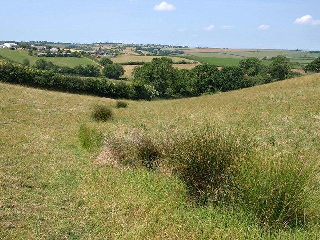 Rushy field near Capton