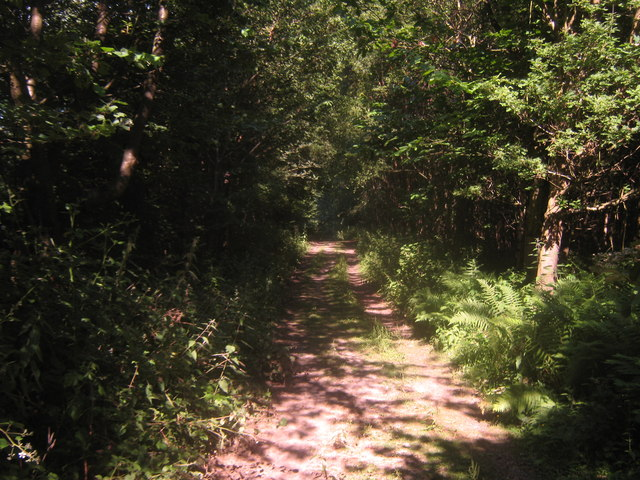 Footpath in Puckden Wood