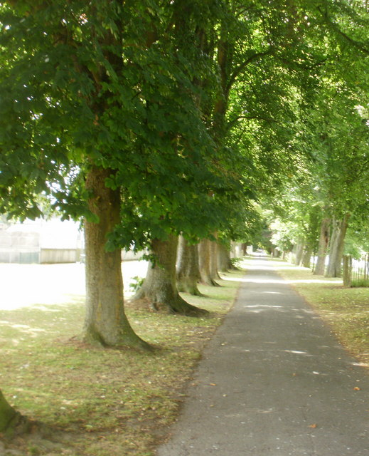 Tree-lined riverside path, Builth Wells