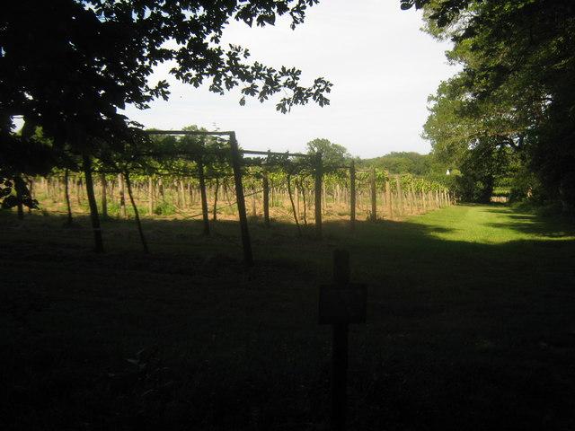 Footpath beside Penshurst Vineyard