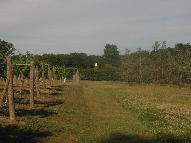 Track in Penshurst Vineyard