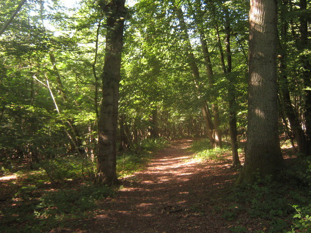 Footpath in South Park Wood