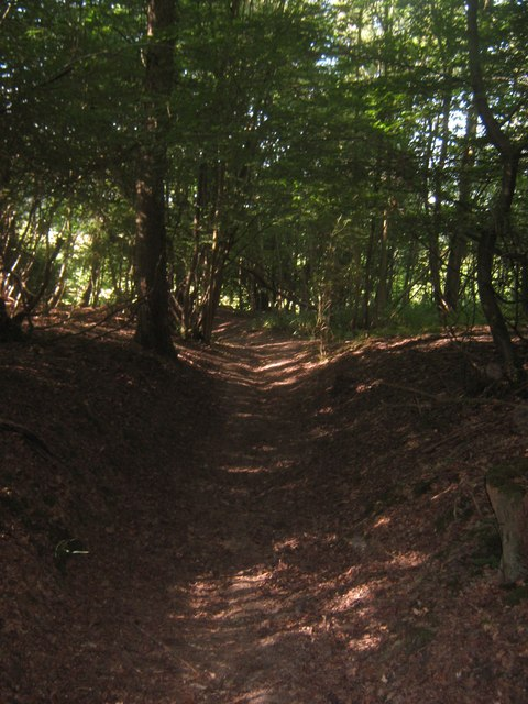 Footpath in South Park Wood (2)