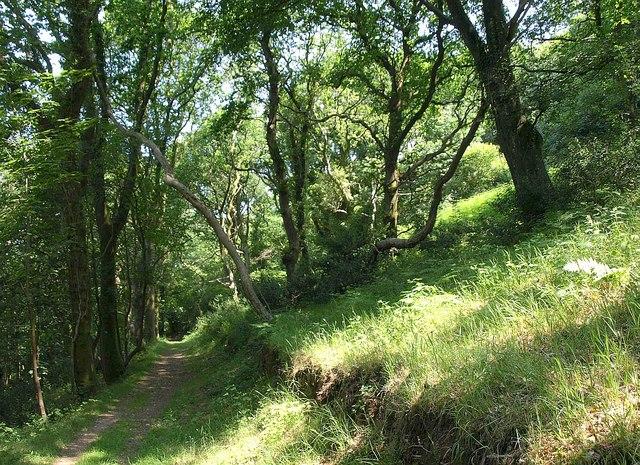 Capton Wood