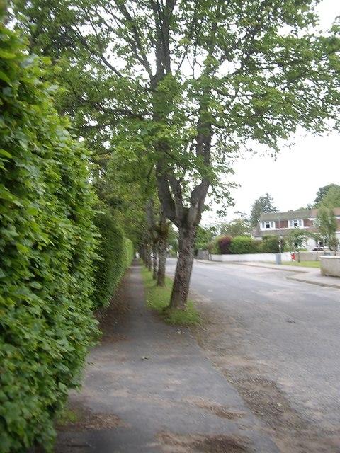 Tree-lined William Street, Torphins