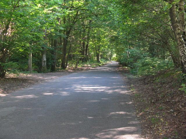 Lane north to Selham