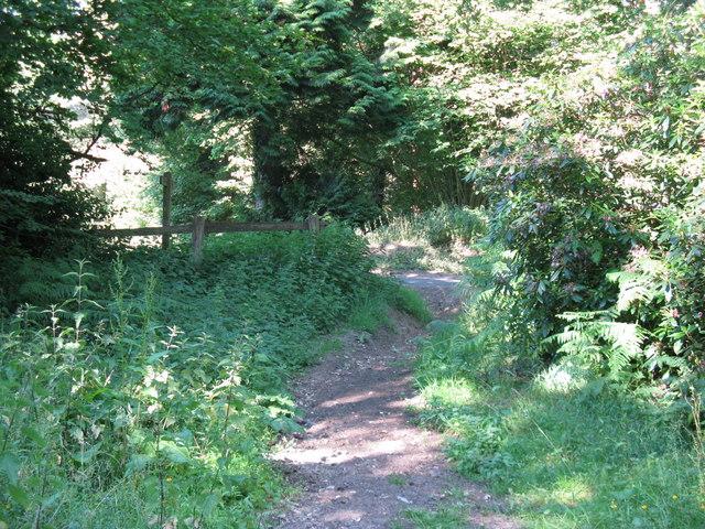 Bridleway junction with lane near Fitzlea Wood
