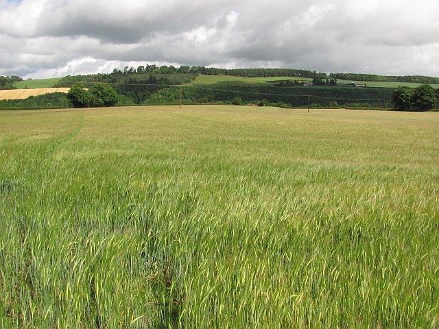Barley, Lesudden