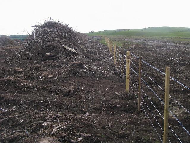 Plantation Clearance