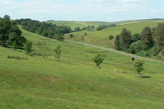 Valley of the Tor Brook