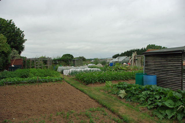 Allotments, Wick