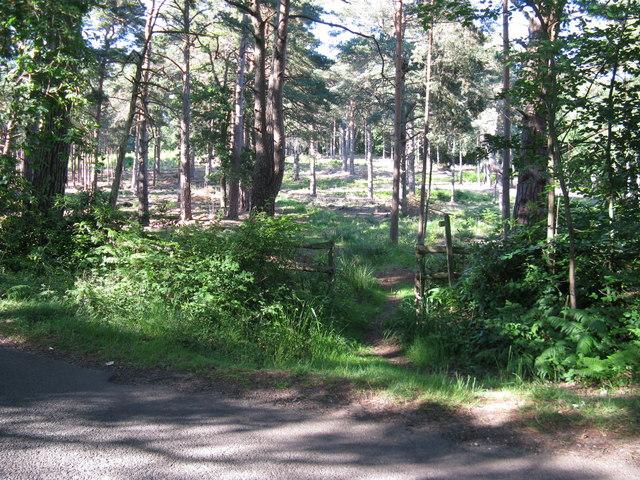 Bridleway into Fitzlea Wood