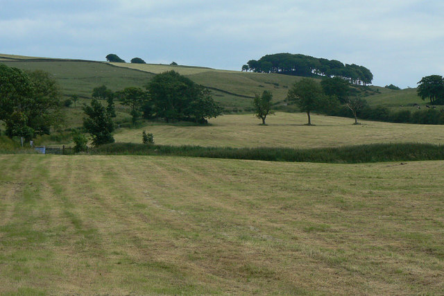Hayfields near Hollinset Farm