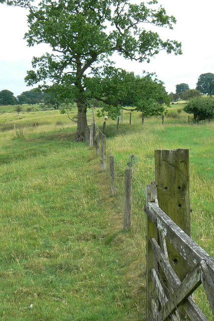 Fence and oak tree