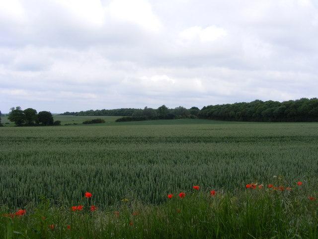 The view towards Garden Wood