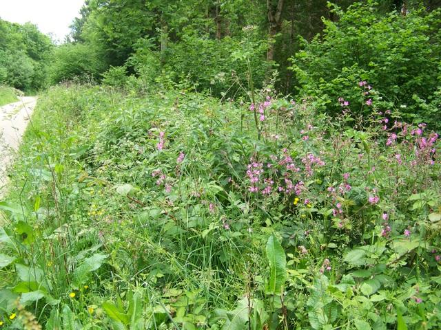 Woodland, Broadley Wood