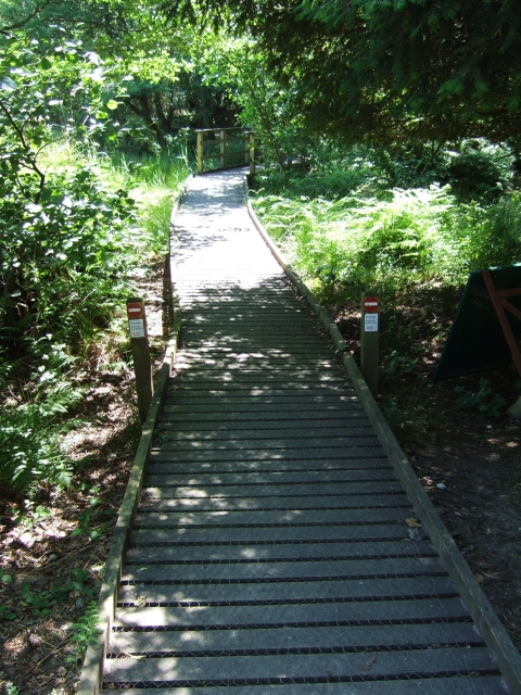 Boardwalk into nature reserve on Brownsea Island