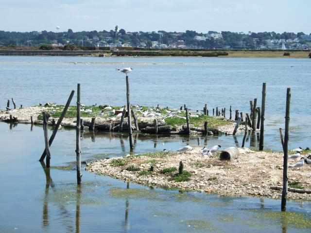 The lagoon on Brownsea Island