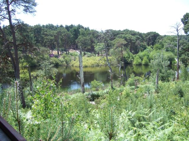 Dorset Wildlife Trust nature reserve