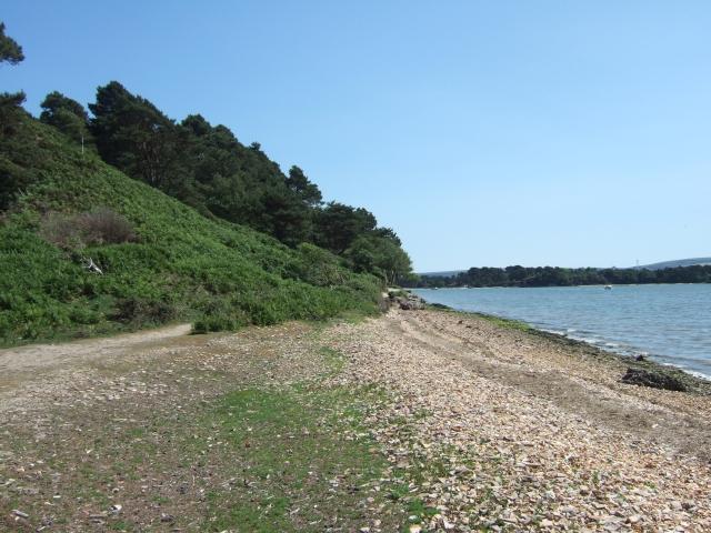 Beach south of Pottery Pier, Brownsea Island