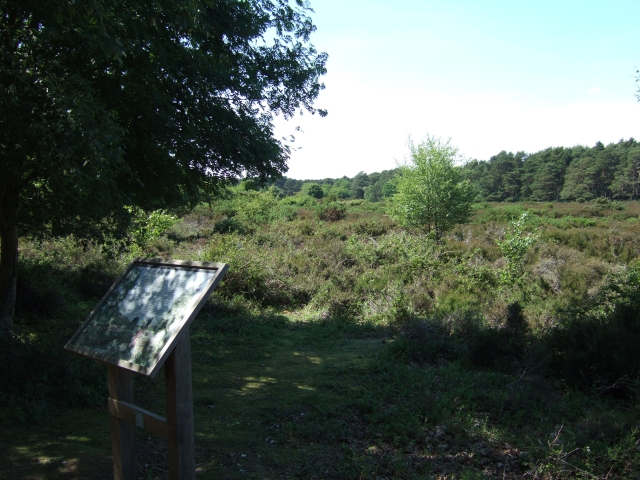 Heathland on Brownsea Island