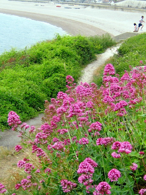 Footpath and Red Valerian - Portland