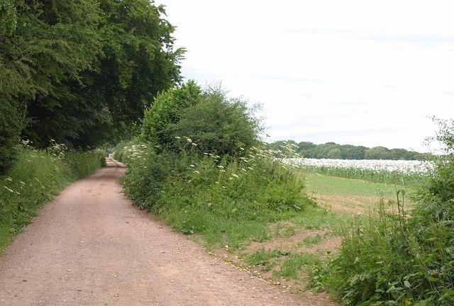 Footpath by The Plantation