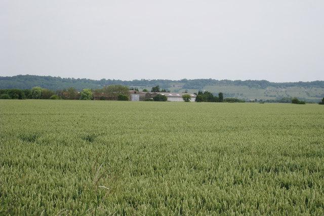 Wheat Fields near Orgarswick Farm