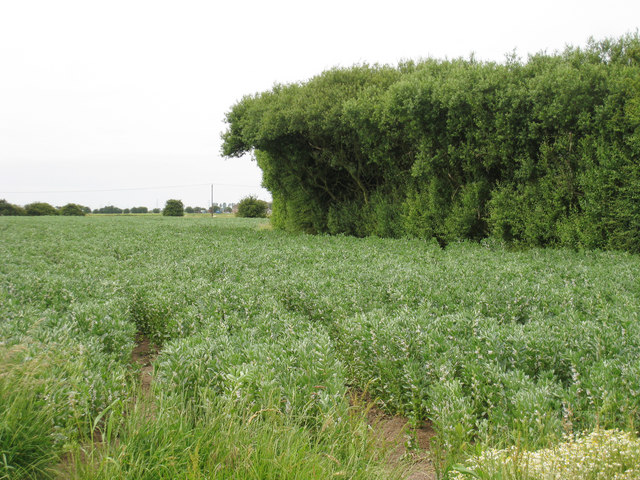 Crop Field near Oldhouse Bridge