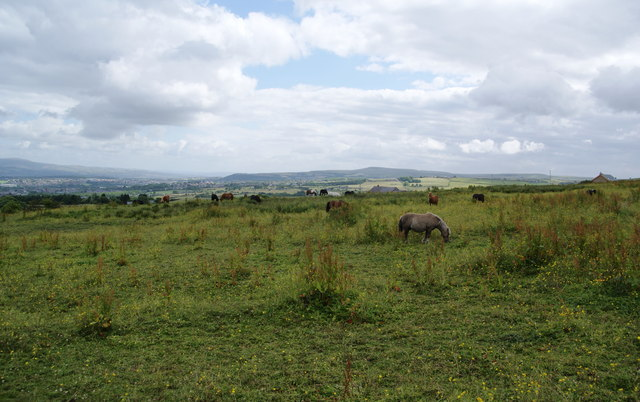 Ponies grazing near Red Shell Farm