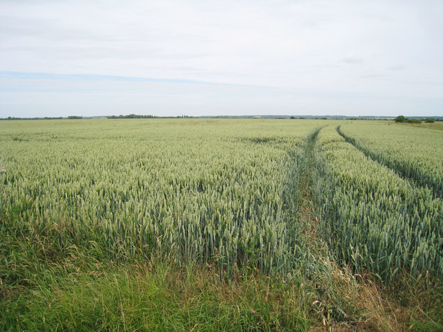 Wheat Field off Newchurch Lane