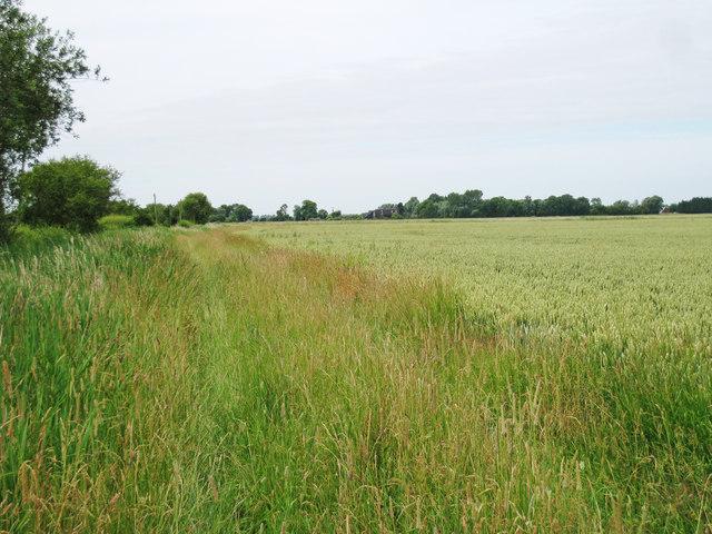 Wheat Field off Newchurch Lane
