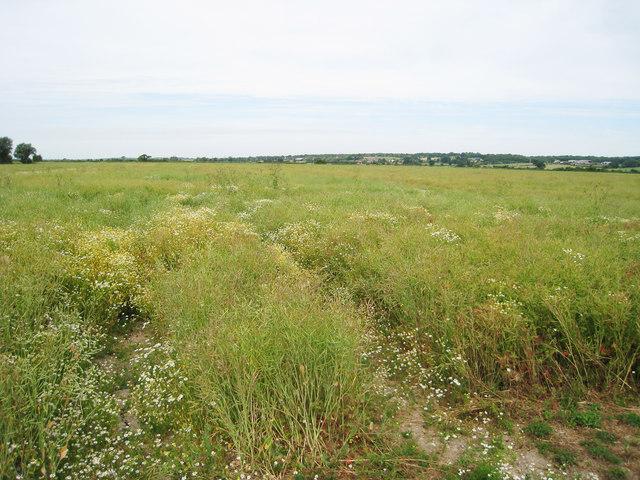Crop Field near Bilsington