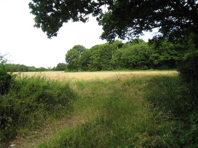 Field off Brisley Lane
