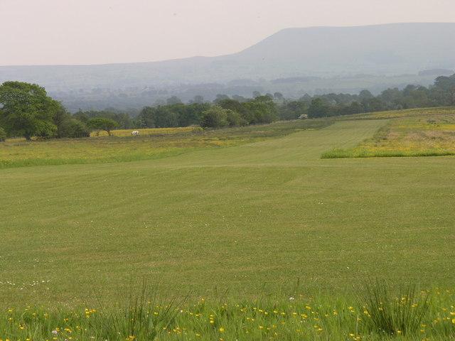 Grass airstrip