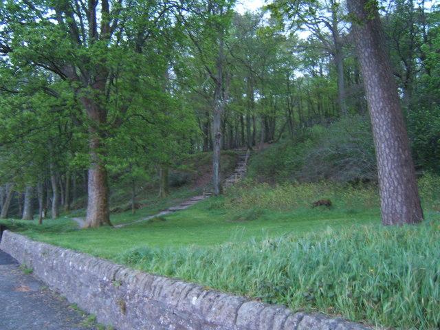 Footpath into Skeoch Wood