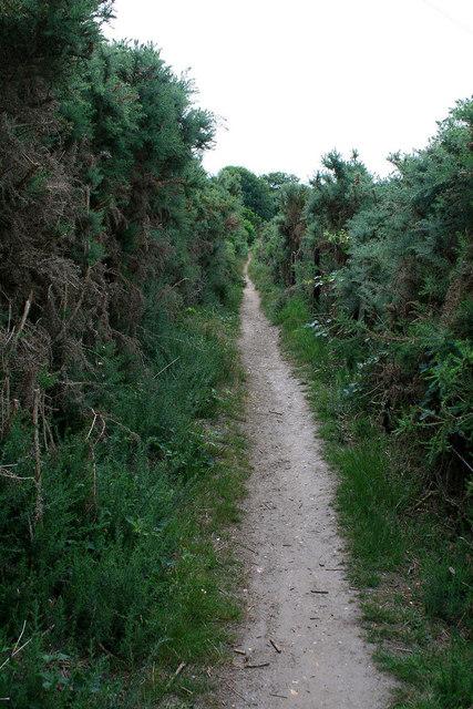 Path through tall gorse