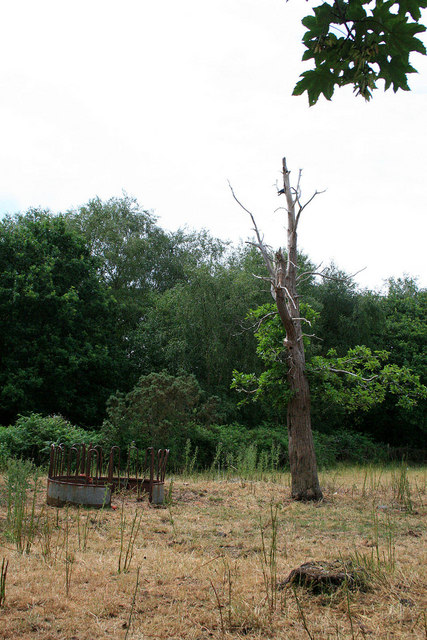 Old tree an Cattle feeding station