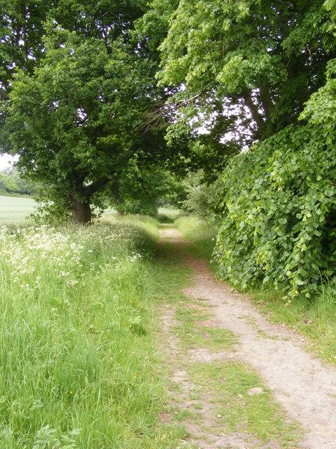 Bridleway towards Fagbury Cliff