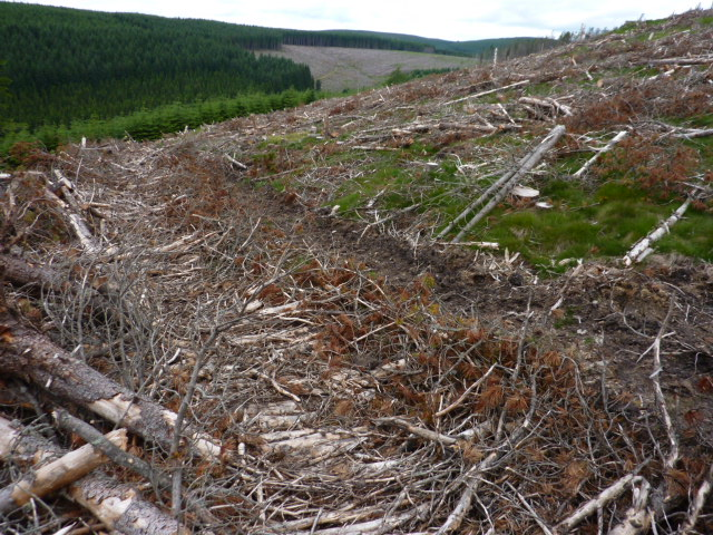 Cleared area forest