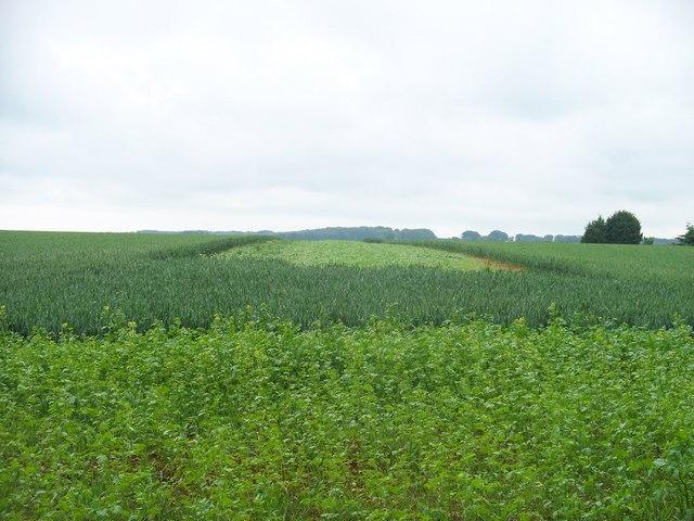 Strange crop patterns