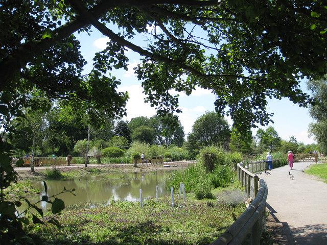 Early summer, Slimbridge